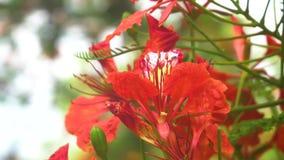 Закройте вверх по естественному цветку на дереве летом Солнцем 4K, видеоклип UHD сток-видео