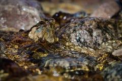 Закройте вверх по заводи воды плавая над камнями Стоковые Изображения RF