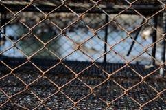Закройте вверх по загородке Стоковая Фотография RF