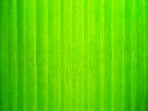 Закройте вверх по зеленым обоям лист Стоковое Изображение RF