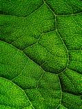 Закройте вверх по зеленым обоям лист стоковое изображение