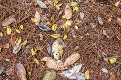 Закройте вверх по земле сосны леса взгляд сверху Стоковая Фотография