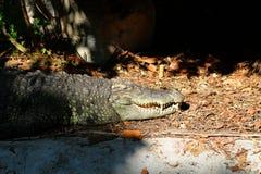 Закройте вверх по изображению головы зоопарка крокодила в Таиланде Стоковая Фотография