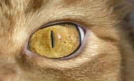 Закройте вверх по изображению глаза кота Стоковые Изображения RF