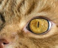 Закройте вверх по изображению глаза кота Стоковое Изображение