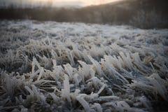 Закройте вверх по изображению ландшафта фотографии макроса подметенных ветром белых частиц льда, который замерли на траве принято Стоковые Изображения