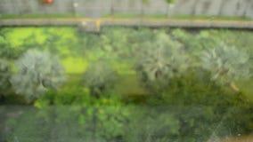 Закройте вверх по изображению падений дождя понижаясь на окно сток-видео