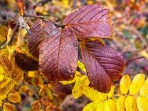 Закройте вверх по листьям Стоковое фото RF