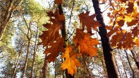 Закройте вверх по листьям Стоковое Изображение