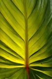Закройте вверх по лист снятым макросом зеленым Стоковое Изображение