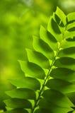 Закройте вверх по лист снятым макросом зеленым Стоковое фото RF