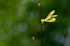 Закройте вверх по лист снятым макросом зеленым Стоковая Фотография