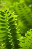 Закройте вверх по лист снятым макросом зеленым Стоковые Изображения RF