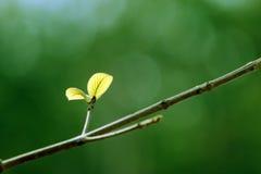 Закройте вверх по лист снятым макросом newborn Стоковые Изображения RF