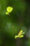 Закройте вверх по лист снятым макросом newborn Стоковые Изображения