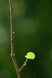Закройте вверх по лист снятым макросом newborn Стоковое фото RF