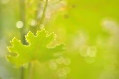 Закройте вверх по лист съемки макроса Стоковое Изображение