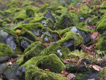 Закройте вверх по камням базальта покрыл зеленый мох и упаденное boke листьев Стоковые Изображения