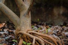 Закройте вверх по корням дерева в саде Стоковые Изображения