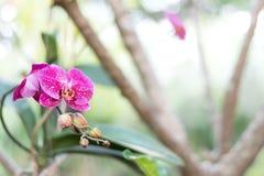 Закройте вверх по красивому белому цветку орхидеи природы стоковое изображение