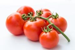 Закройте вверх по красному томату вишни на белой изолированной предпосылке Стоковое фото RF