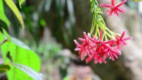 Закройте вверх по красному цветку в саде с предпосылкой нерезкости зеленой сток-видео