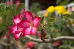 Закройте вверх по красному цветку в саде Стоковое фото RF