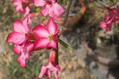 Закройте вверх по красному цветку в саде Стоковое Изображение