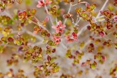 Закройте вверх по листьям зеленых и красного цвета на дереве в деревне JIdaimura даты Noboribetsu исторической на Хоккаидо, Япони Стоковые Изображения
