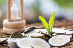 Закройте вверх по лист на монетках роста или вклада для того чтобы принести пользу финансы стоковое изображение rf