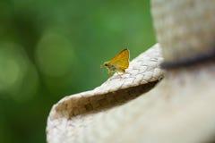 Закройте вверх по макросу бабочки на винтажной шляпе, запачканном зеленом backgr Стоковые Изображения