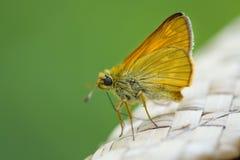 Закройте вверх по макросу бабочки на винтажной шляпе, запачканном зеленом backgr Стоковое Изображение RF
