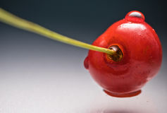Закройте вверх по макросу свежей очень вкусной вкусной сладостной вишни с стержнем с падением воды на серой предпосылке градиента Стоковое Изображение RF