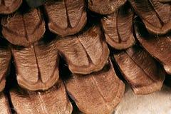 Закройте вверх по масштабам конуса сосны Стоковые Фотографии RF