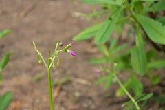 Закройте вверх по малому цветку с расплывчатой предпосылкой Стоковые Фото