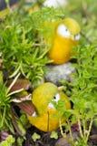 Закройте вверх по милой кукле птицы в саде Стоковое Фото