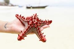 Закройте вверх по морским звёздам в женских руках каникула зонтика неба пляжа предпосылки голубая цветастая стоковая фотография