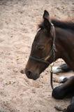 Закройте вверх по новичку младенца залива Стоковое фото RF
