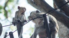Закройте вверх по обезьяне младенца сидя на черном проводе с семьей стоковые фотографии rf