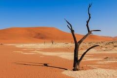 Закройте вверх по долине Намибии deadvlei дерева Стоковое Изображение