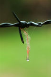 Закройте вверх по падению воды съемки макроса на поднял Стоковые Фото