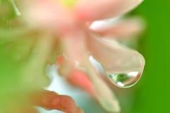 Закройте вверх по падению воды съемки макроса Стоковая Фотография