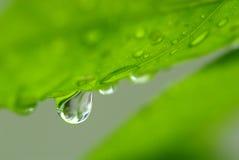 Закройте вверх по падению воды съемки макроса Стоковое Фото