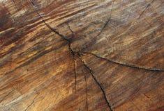 Закройте вверх по поперечному сечению ствола дерева показывая годичные кольца древесина f Стоковые Фотографии RF