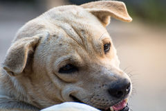 Закройте вверх по портрету бездомной собаки, бродячей собаке Стоковые Изображения RF
