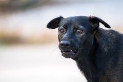 Закройте вверх по портрету бездомной собаки, бродячей собаке Стоковое Изображение RF