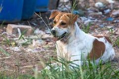 Закройте вверх по портрету бездомной собаки, бродячей собаке Стоковая Фотография