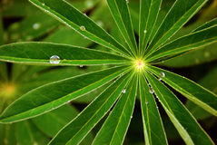 Закройте вверх по предпосылке дождевых капель Стоковые Изображения