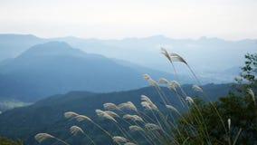 Закройте вверх по предпосылке травы и горы цветка в утре Стоковое фото RF