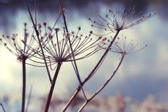 Закройте вверх по предпосылке цветка Стоковое Изображение RF